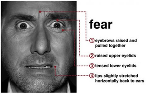 microexpressions_fear