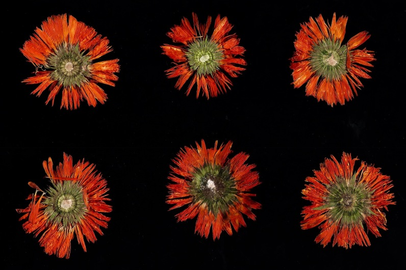 Fleurs sechees - 1 001